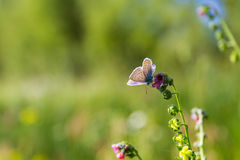 Beautiful butterfly and flowers Stock Photos