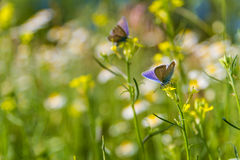 Beautiful butterfly and flowers Royalty Free Stock Image