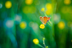 Beautiful butterfly and flowers Royalty Free Stock Images