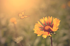 Beautiful butterfly and flowers Stock Photography