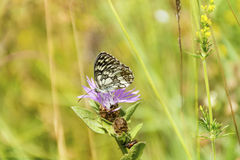 Beautiful  butterfly on a flowers Royalty Free Stock Photos