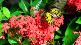 Beautiful butterfly in the garden stock video