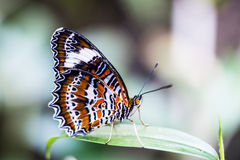 Beautiful butterfly in the garden stock photos