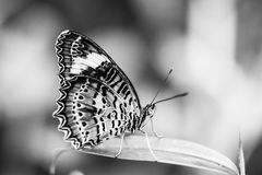 Beautiful butterfly in the garden Royalty Free Stock Image