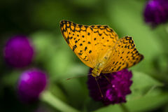 Beautiful butterfly in the garden Stock Photo