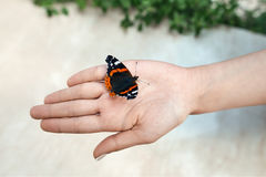 Beautiful butterfly on girl hand Royalty Free Stock Photos