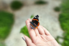 Beautiful butterfly on girl hand Royalty Free Stock Images