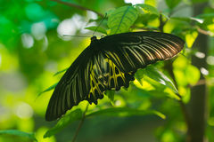 Beautiful butterfly. On green background Stock Photography