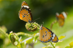 Beautiful butterfly. On green background Royalty Free Stock Photo