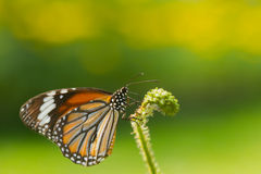 Beautiful butterfly. On green background Royalty Free Stock Photography