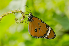 Beautiful butterfly. On green background Royalty Free Stock Image