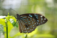 Beautiful butterfly. On a green leaf Royalty Free Stock Images