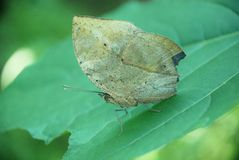 Beautiful butterfly. On a green leaf Stock Photo