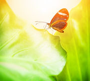 Beautiful butterfly on green leaf Stock Images