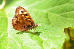 Beautiful butterfly on green leaf in springtime Stock Image