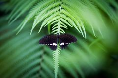 Beautiful butterfly on green leaf. Summertime greenery stock photography