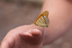 Beautiful butterfly on the hand. Beautiful butterfly sitting on the man`s hand Royalty Free Stock Photography