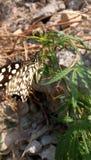 Beautiful butterfly and hemp tree stock photo