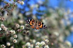 Beautiful butterfly while hiking in the superstition mountains royalty free stock images