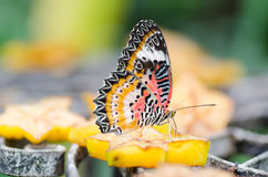Beautiful butterfly holding on piece of fruit Royalty Free Stock Images