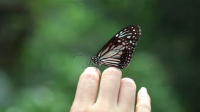Beautiful Butterfly On The Human Hand. stock video