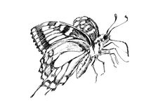 Beautiful butterfly illustration sketch. Graphic black and white illustration of a beautiful butterfly royalty free illustration