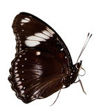 Beautiful butterfly isolated Stock Photos
