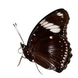 Beautiful butterfly isolated Royalty Free Stock Photo