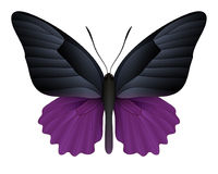 Free Beautiful Butterfly Isolated On A White Background Stock Image - 98045131