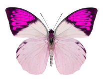 Beautiful Butterfly Isolated On White Stock Photography