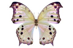 Beautiful butterfly isolated on a white stock photo