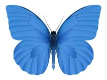 Beautiful butterfly isolated on a white background. Appias nero butterfly. 3D illustration royalty free illustration