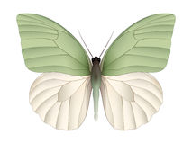 Beautiful butterfly isolated on a white background Royalty Free Stock Image