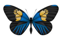 Beautiful butterfly isolated on a white background. Longwings or heliconians butterfly. 3D illustration royalty free illustration