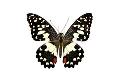 Beautiful butterfly isolated on white background.