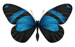 Beautiful butterfly isolated on a white background Royalty Free Stock Photography