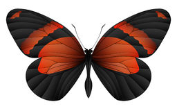 Beautiful butterfly isolated on a white background Royalty Free Stock Images