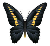 Beautiful butterfly isolated on a white background Stock Images