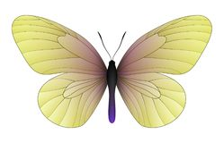Beautiful butterfly isolated on a white background. Idea leuconoe, the paper kite, rice paper or large tree nymph isolated on a white background. Vector 3D stock illustration