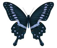 Beautiful butterfly isolated on a white background. Papilio thoas or the king swallowtail isolated on a white background. Vector 3D illustration royalty free illustration