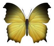 Beautiful butterfly isolated on a white background. Salamis or mother of pearls butterfly. 3D illustration vector illustration