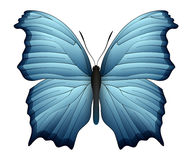 Beautiful butterfly isolated on a white background. Salamis or mother of pearls butterfly. 3D illustration Stock Photos