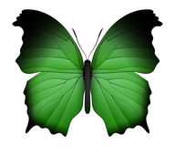 Beautiful butterfly isolated on a white background. Salamis or mother of pearls butterfly. 3D illustration Stock Image