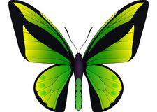 Beautiful butterfly isolated on a white background. Vector 3D illustration stock illustration