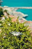 Beautiful butterfly and Karlovasi port on background Royalty Free Stock Image