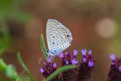 Gray butterfly royalty free stock image