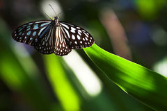 Beautiful butterfly on the leaf Stock Photos
