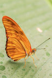Beautiful butterfly on the leaf. Royalty Free Stock Photo