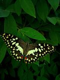 Beautiful butterfly on the leaves. stock photos