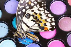 Beautiful butterfly on make-up eye shadows Stock Photography